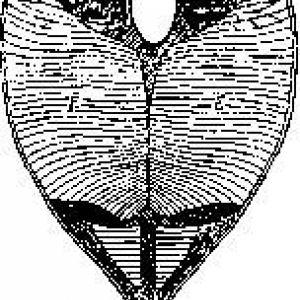 Елентрічесніе органи