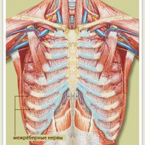Міжреберна невралгія з лівого боку: симптоми, причини і методи лікування